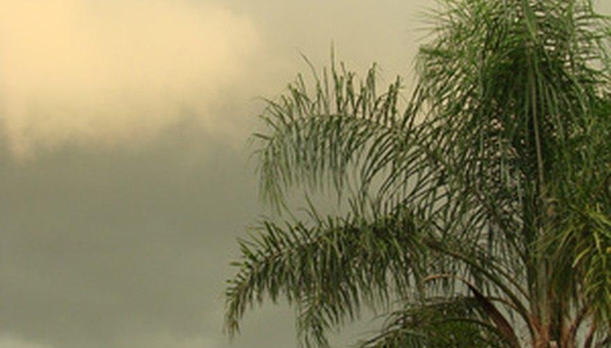 South Florida has a subtropical environment.
