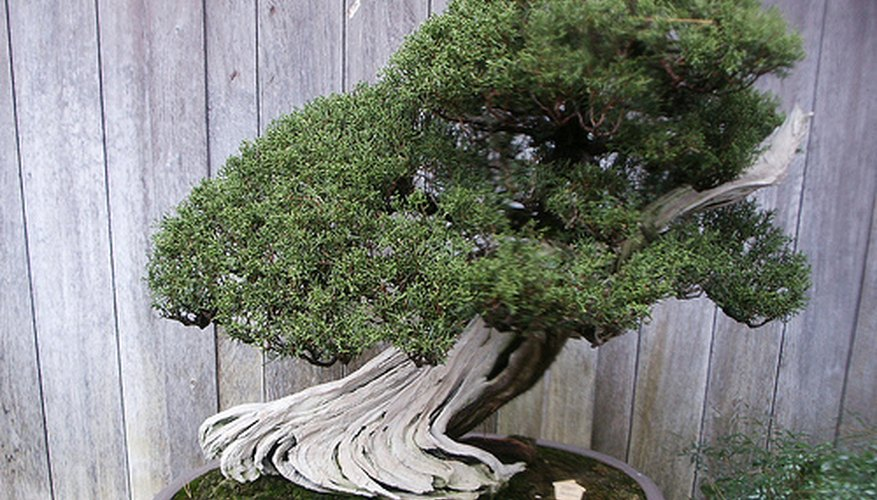 Huntington Library Japanese Bonsai Garden 138