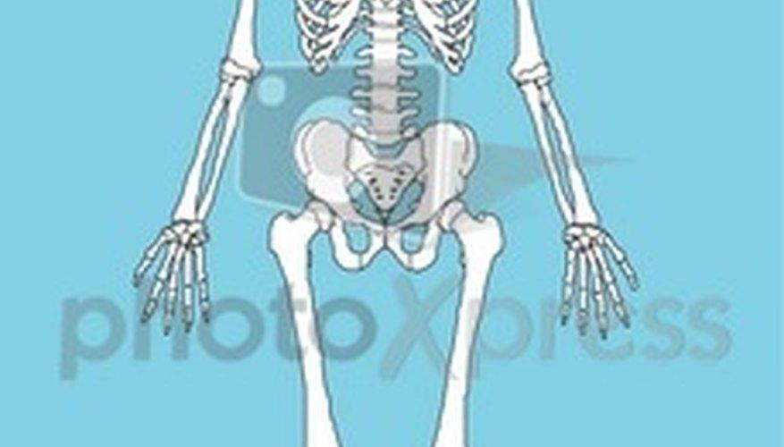 → Cómo crear un esqueleto humano de cartón | Geniolandia