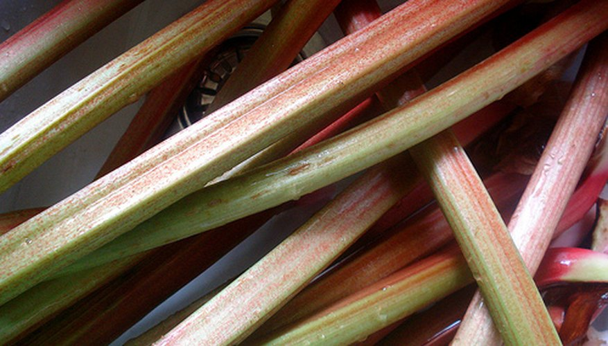 Harvested rhubarb