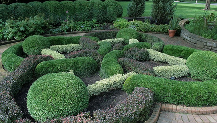 Trimmed buxus in a formal garden.