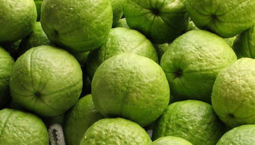 Asian varieties of guava are often eaten green.