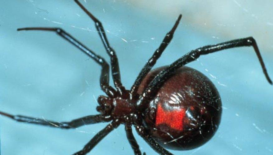 Es mejor mantenerse alejado de las arañas si no sabes lo suficiente sobre ellas.