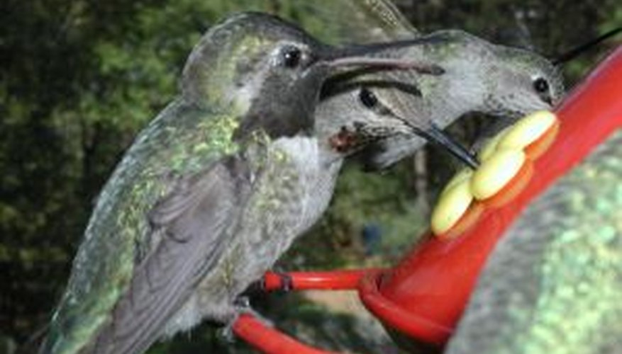 Hummingbirds prefer clean feeders.