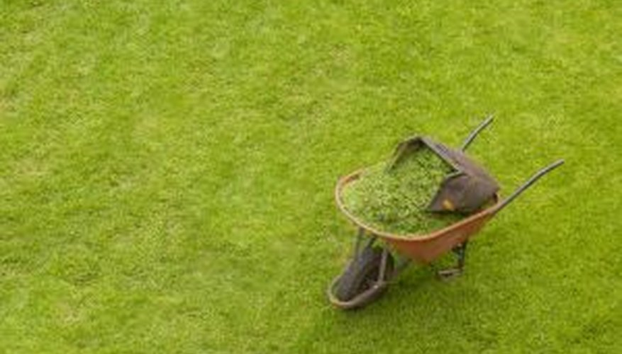 Remove crabgrass as soon as you see it.