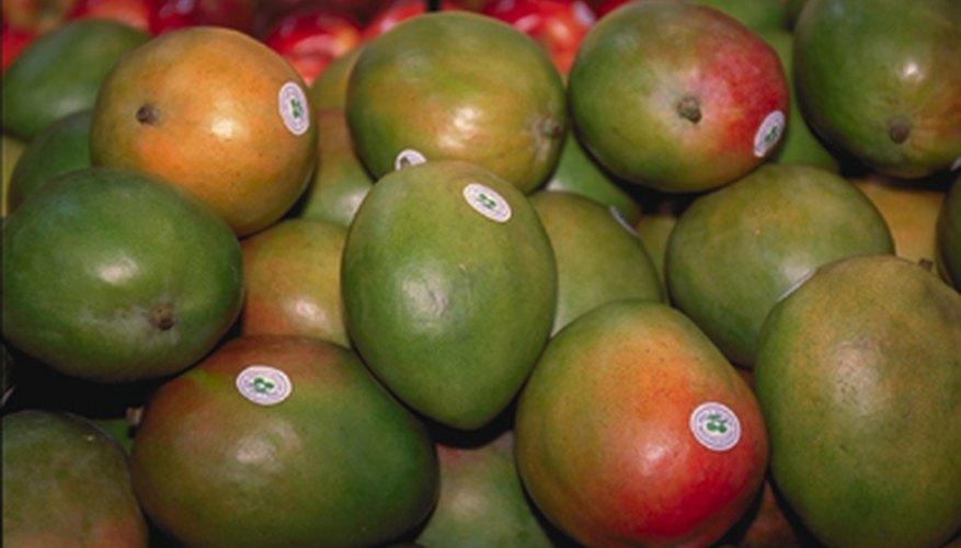 Cómo injertar un árbol de mango.