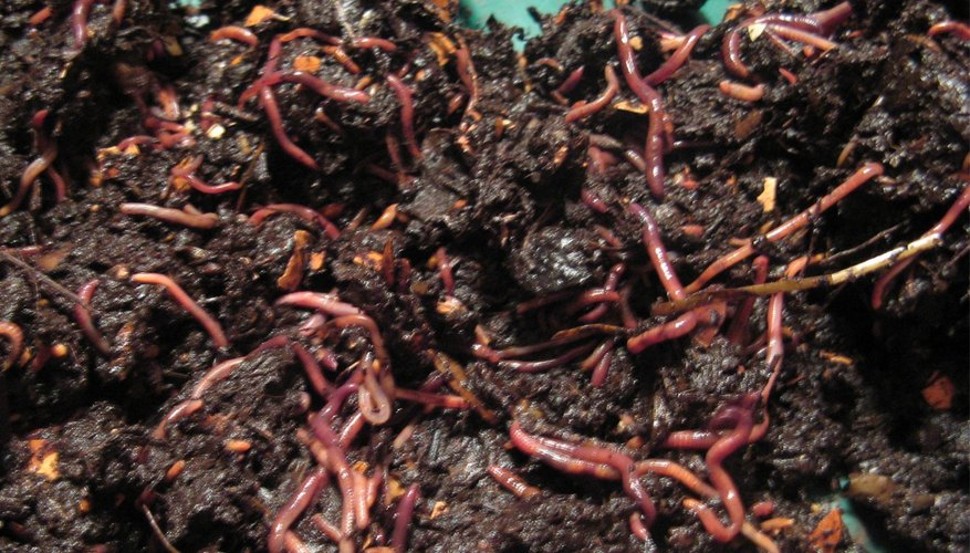 How to Make a Homemade Worm Compost Bin