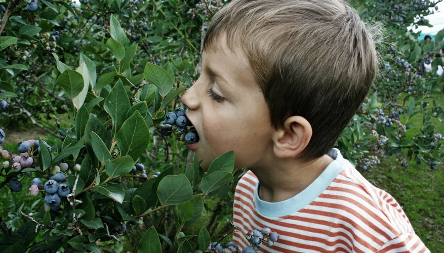 Now you know what's been eating your blueberries.