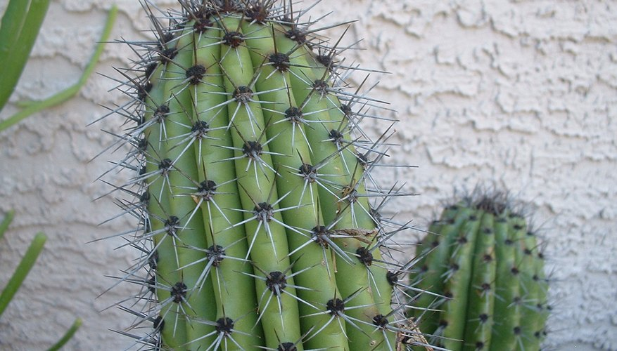 Exceeds 110 Degrees F And The Landscape Along Highway Shows Nothing But Acres Of Spiny Unfriendly Looking Plants One Might Declare Cactus To Be