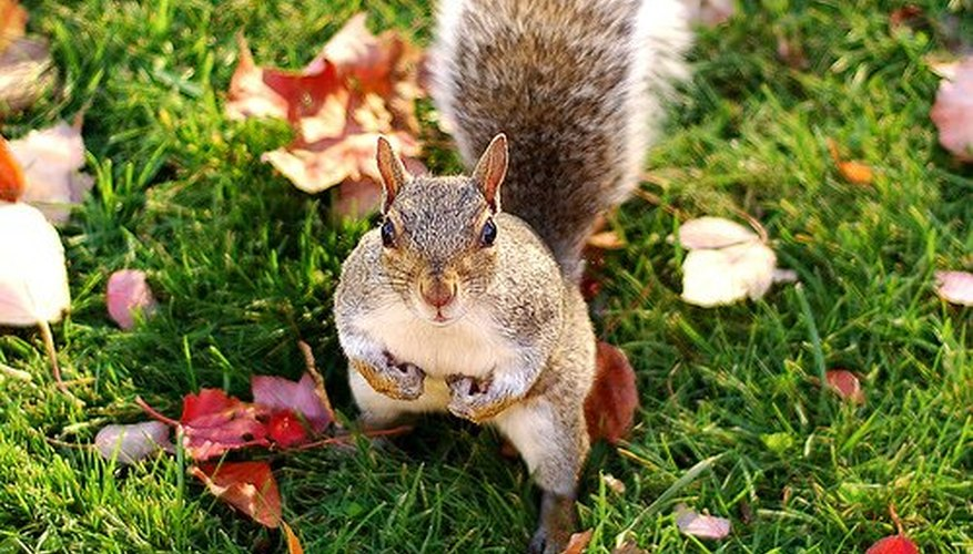 Keep squirrels out of your garden