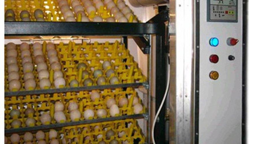 Las incubadoras de aire forzado pueden empollar más huevos.