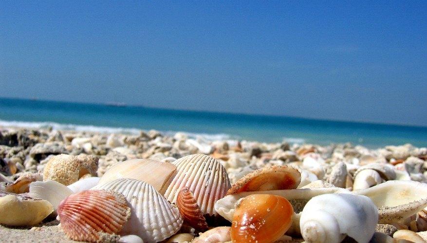 Observa la marea para ayudarte a desenterrar hermosas conchas de mar.