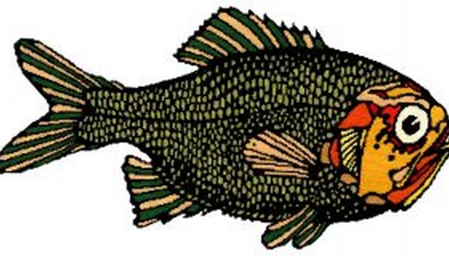 Los disfraces en espuma con forma de pescado pueden lucir así de bien.