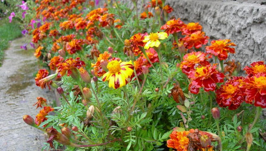 Annuals add rich color to garden beds.