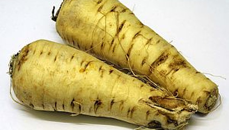 Parsnips harvested for winter storage