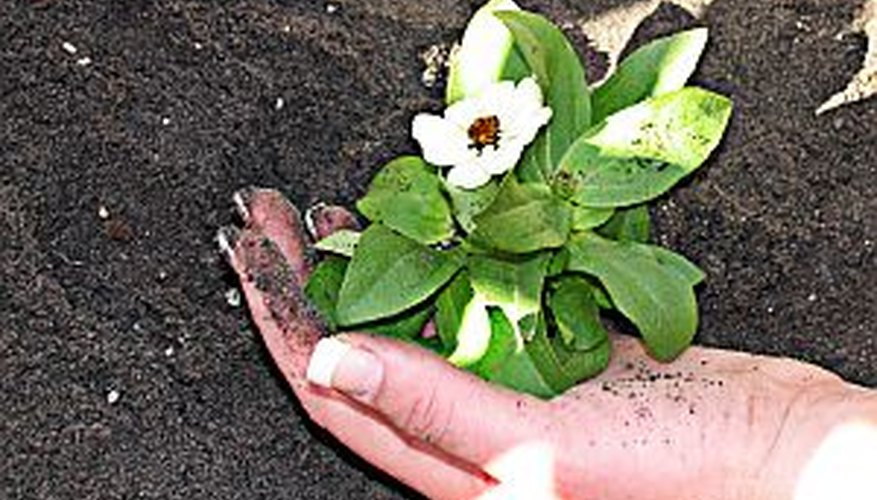 Planting in clay soil presents special challenges to a gardener.