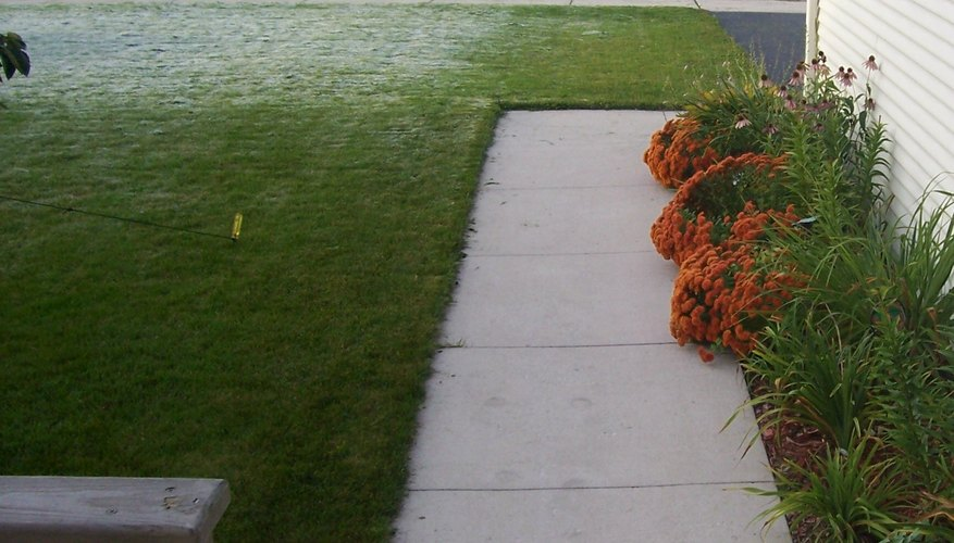 Start winterizing mums after the first hard freeze.