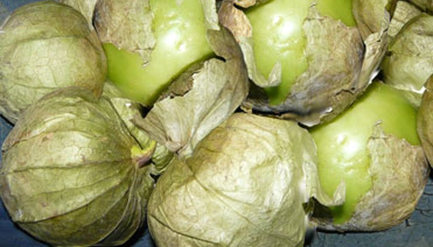Tomatillos are light green to yellow with a removable paper shell