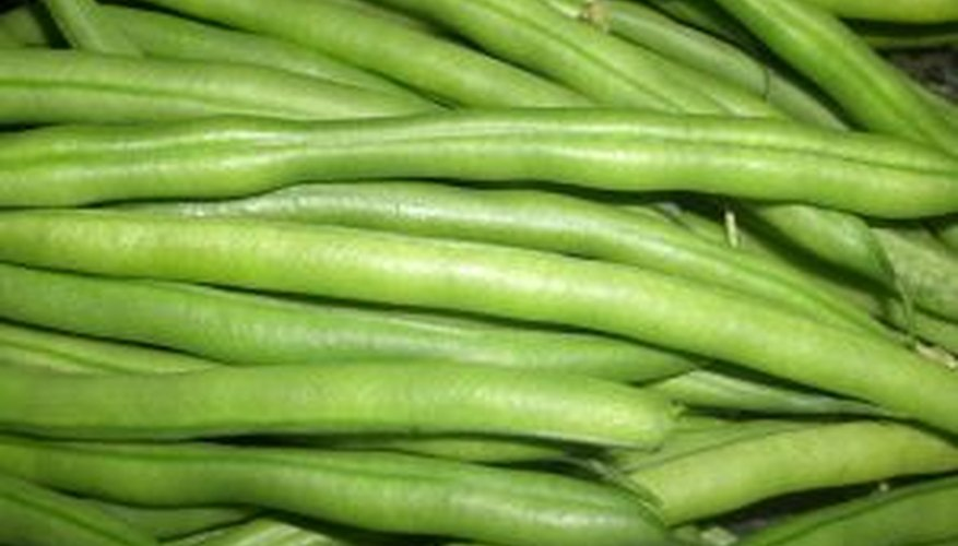 Green beans are about as thick as a pencil.