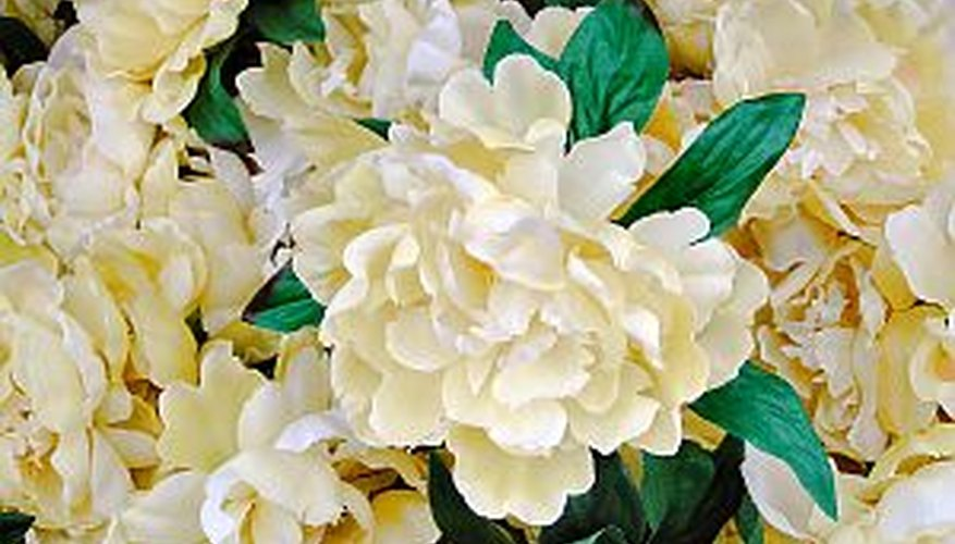Prepare peonies for winter to ensure they bloom beautifully again in the spring.