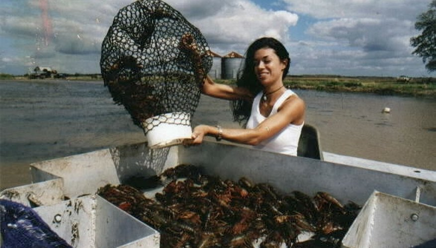crawfish farmer