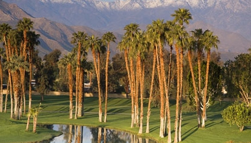 Whisk your beau away on a romantic weekend to Palm Springs!