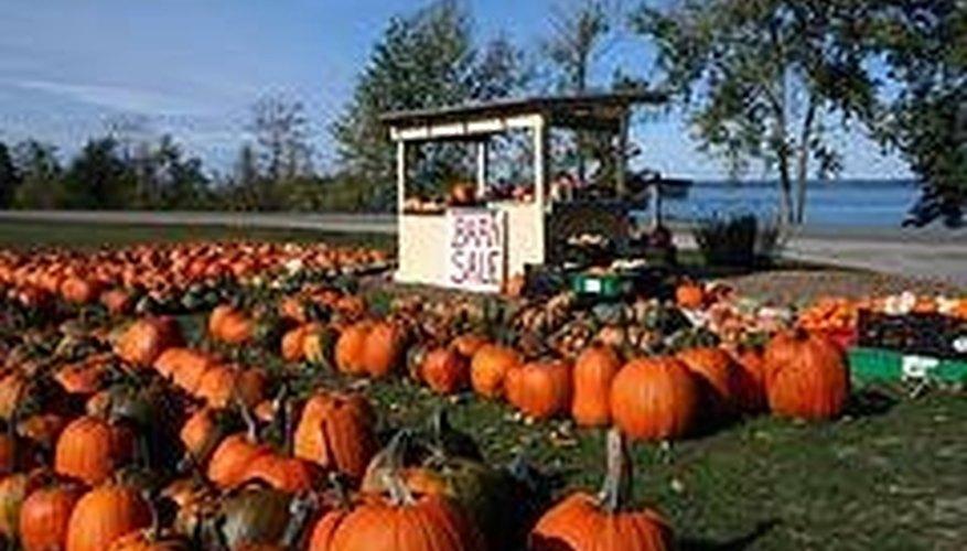 Sell Pumpkins at the Farmers Market