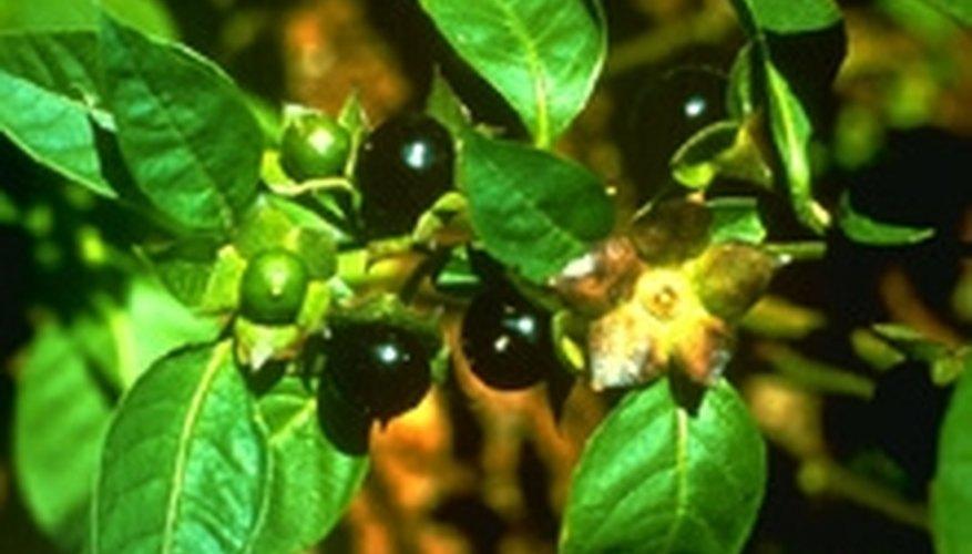 Seed Bearing Plant