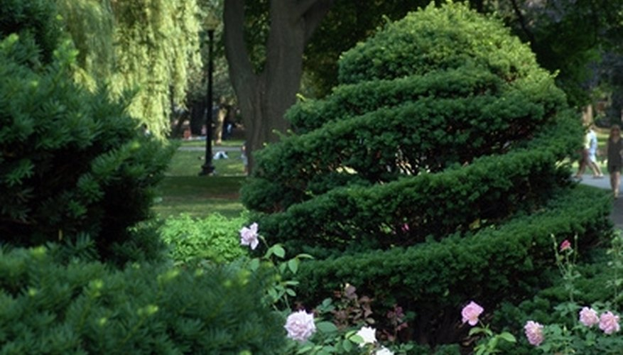 A rose garden has the aroma and look of romance.