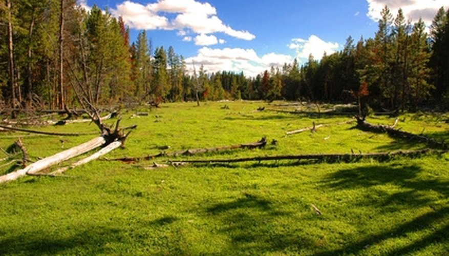Yellowstone National Park can be a rustic, romantic retreat.