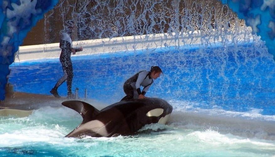 The audience applauses Shamu's smoothness.