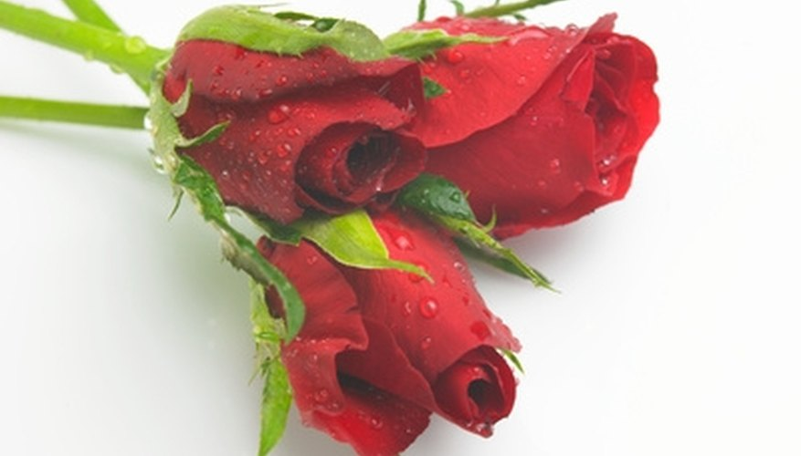 Red roses are traditionally a romantic gift.