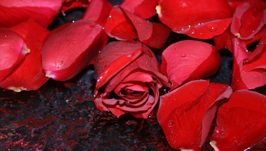 Red roses are a timeless representation of love.