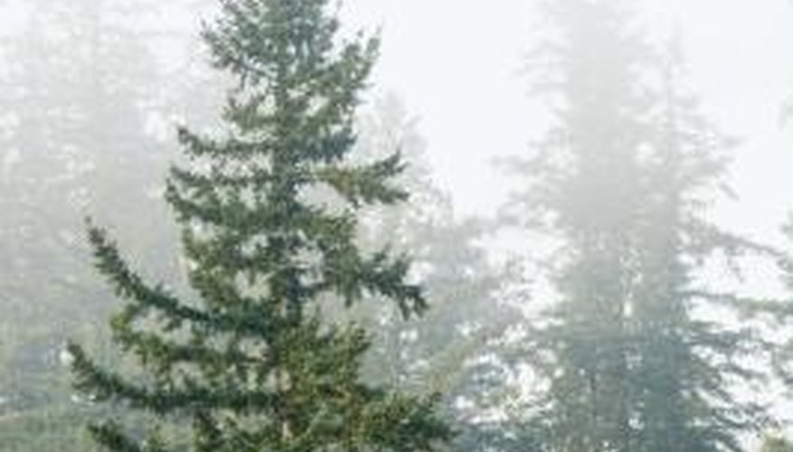 Coniferous forests are home to thousands of animals, usually in regions with colder climates.