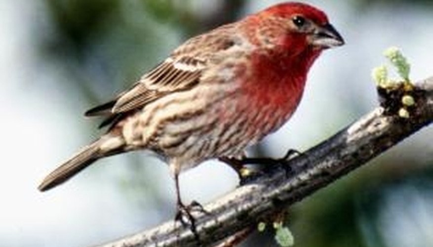 Attract friendly, wild finches to your yard with a finch-specific feeder.