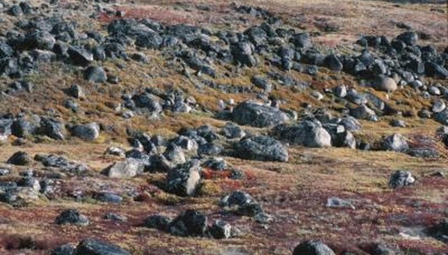 There are no trees in the tundra.