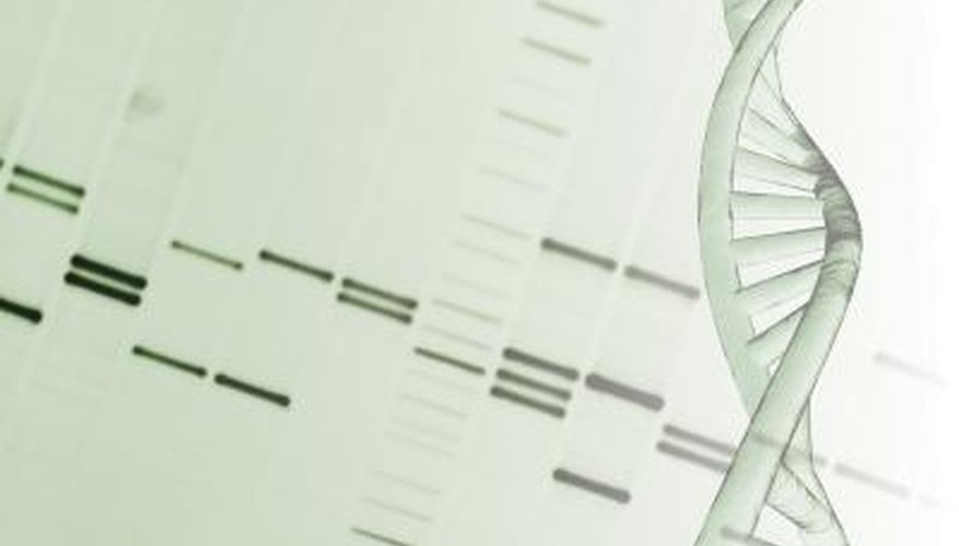DNA sequences make up our predisposed characteristics.