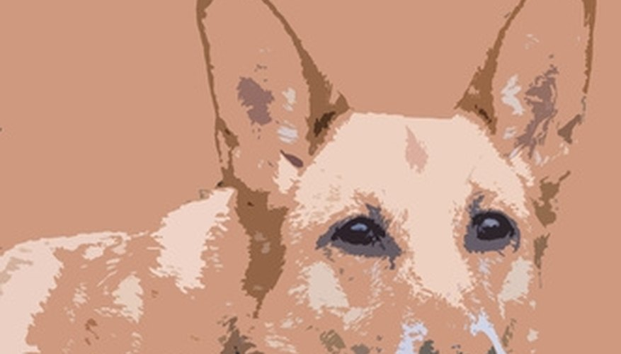 Paint a Dog's Portrait