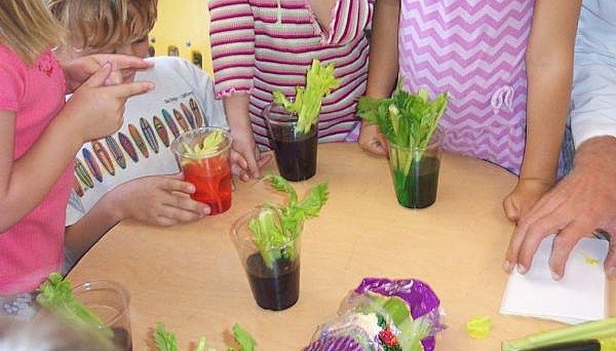 Do a Celery Science Experiment