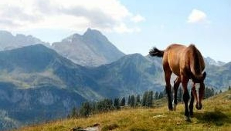 The size of the horse impacts our perception of the distance to the mountains.