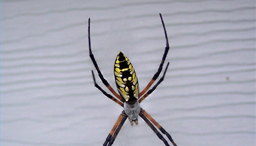 How to Identify Spiders in South Carolina