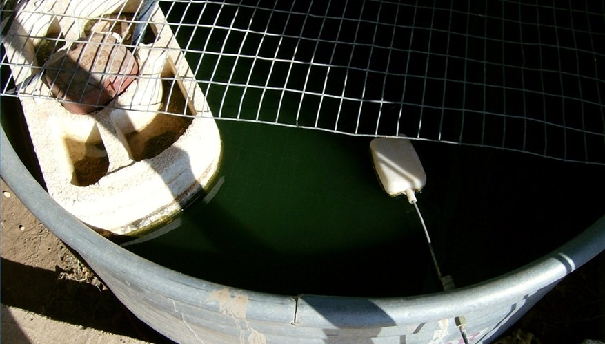 Raising Bait Minnows in Tanks
