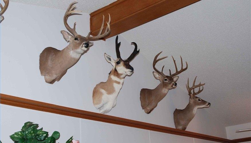 How to Hang a Deer Mount