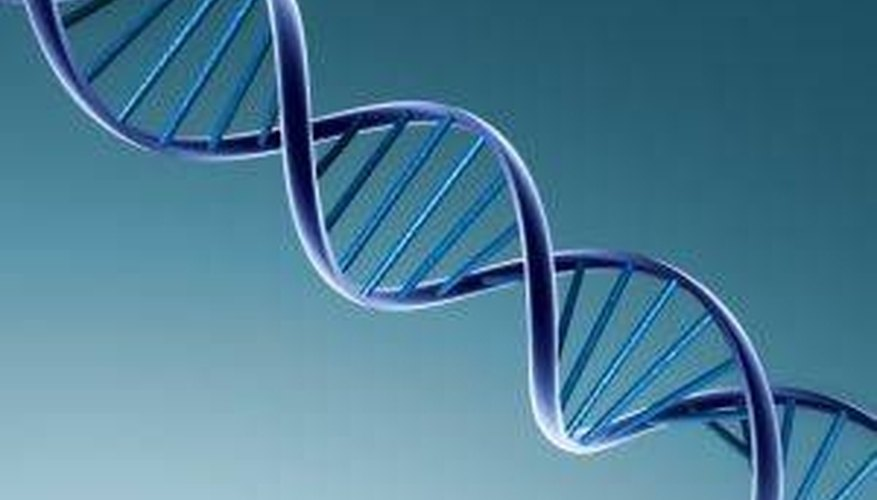 How Does DNA & RNA Differ?
