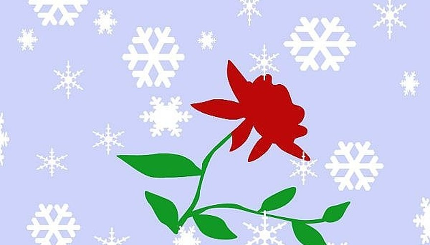 Do Winter Rose Care or Protecting Tree Roses in Winter