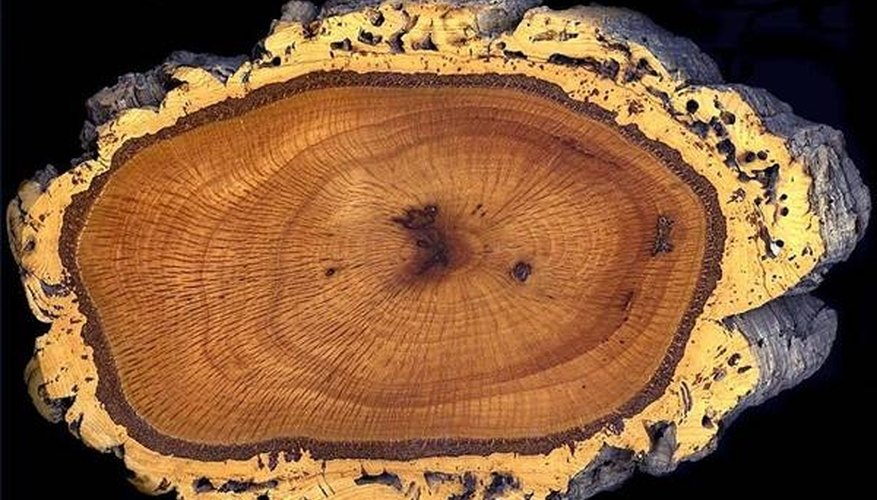 Which Wood Burns the Longest?