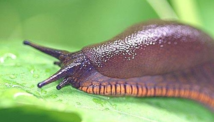How Does a Slug Move?