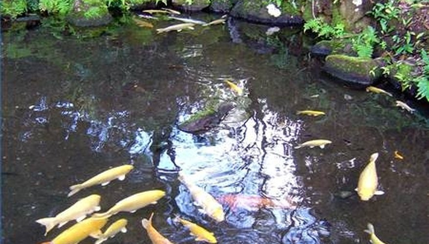 About Backyard Fish Ponds | HomeSteady