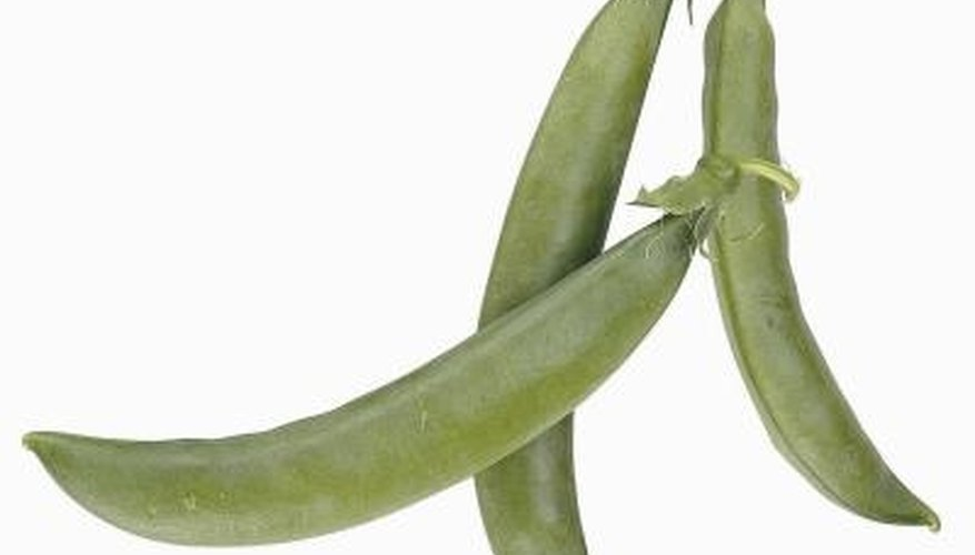 Sugar snap peas were first developed by Dutch and English horticulturists.