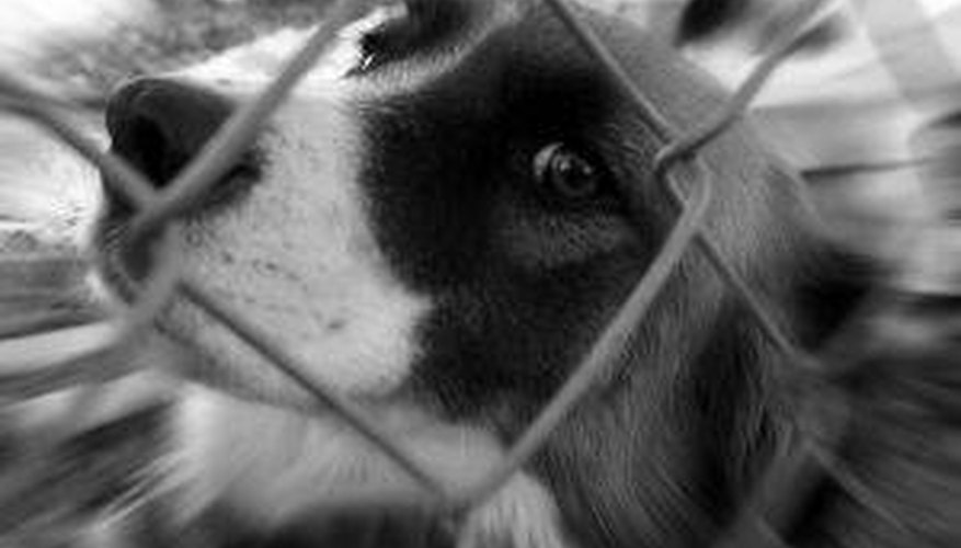 Build a Dog Run of Chain Link Fencing